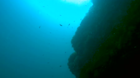 submerge : Small shoal of fish swimming by underwater cliff, feeding themselves, sea world