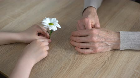 pozitivní : Small hands of granddaughter giving chamomile flower to grandmother.