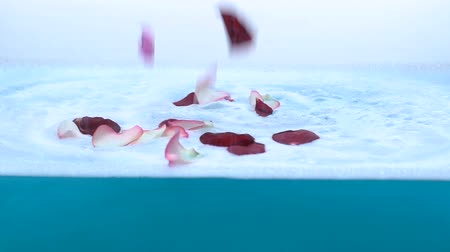kırılganlık : Rose petals falling on water foam, preparation of bath before spa treatments Stok Video