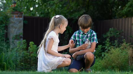 animal adoption : Little siblings playing with found homeless kitten, care and love for animals