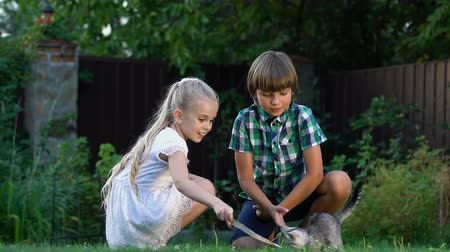 animal adoption : Cute children playing with small kitten outdoors, best moments of childhood