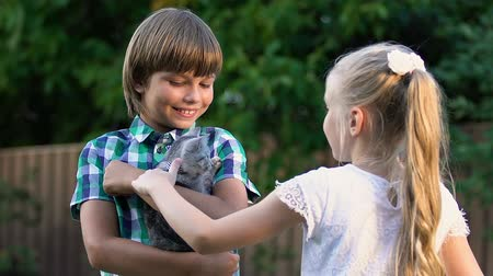 animal adoption : Little girl stroking kitten in neighbor boy hands, children making friends
