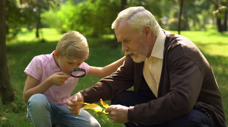 pertavsız : Boy looks at leaf through magnifying glass, granddad helps to explore world