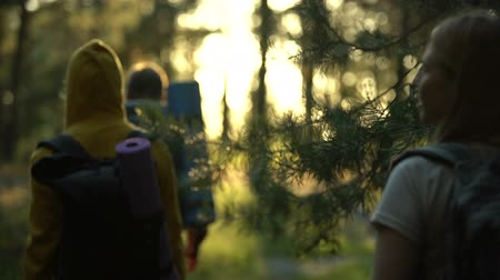 tentáculo : Campers walking in forest during sunset, female looking around, admiring view