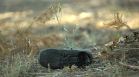 zdjęcia seryjne : Black shoe lying on forest grass near corpse, contract killing, murderer victim Wideo