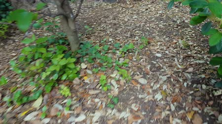 escaping : Escaping man path, walking park, pov of criminal, going through forest, nature