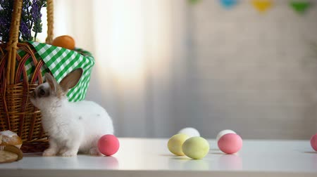mignardise : Little Easter bunny eating sweet cake, colored eggs and basket on table, food Vidéos Libres De Droits