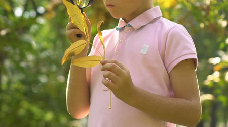 naturalist : Little curious boy looking on leaf through magnifying glass, learning nature