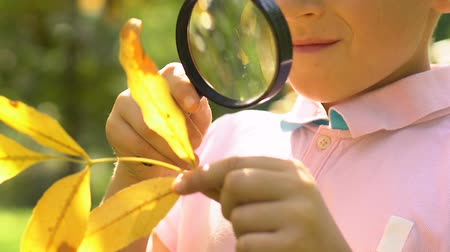 naturalist : Little pupil learning structure of yellow leaf with magnifying glass, close up Stock Footage