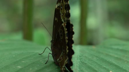 falena : Insects pets, beautiful rare butterfly sitting on leaf at park, entomology