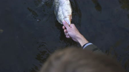 caused : Human taking dead fish from river, water contamination, ecological disaster Stock Footage
