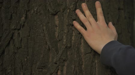 sentiment : Mans hand gently touching tree trunk, nature and forest protection, ecology care