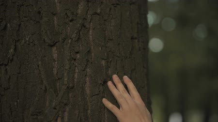 sentiment : Males hand touching tree trunk, loving nature, environmental protection and care