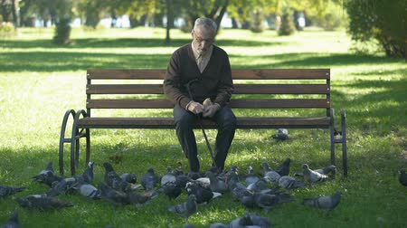bread stick : Calm old man sitting on bench in park and feeding pigeons, loneliness in old age