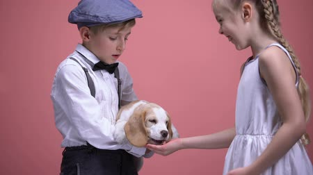 canino : Boy holding puppy, girl feeding dog from open palm, animals love and care