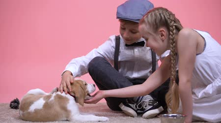 animal adoption : Little boy and girl petting and feeding funny purebred puppy, new family pet Stock Footage
