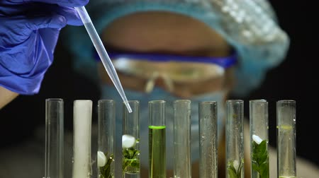 tlen : Biochemist adding chemical agent emitting smoke in tube with green plant, lab Wideo