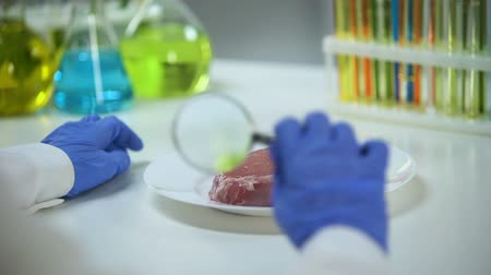 ithalat : Lab assistant examining meat sample, quality control and gmo food expertise