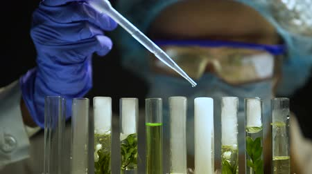oxigênio : Biochemist adding agent in tubes with green plants cosmetology products research Stock Footage