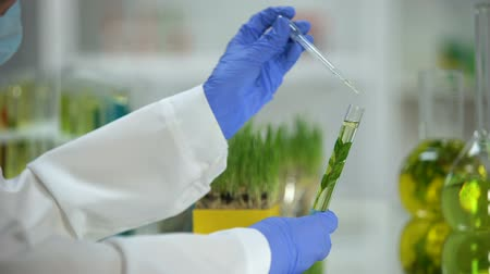 dermatologia : Lab assistant dripping liquid in tube with plant, organic cosmetology extract Stock Footage