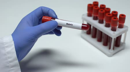 komary : Malaria test, doctor showing blood sample in tube, lab research, health checkup