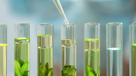científico : Biologist adds oily liquid to plants in test tubes, environment pollution impact