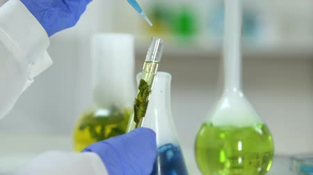 olejnatý : Cosmetologist adding smoky reagent into test tube with plant extract, cosmetics
