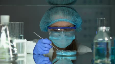 produtos químicos : Chemist analyzing blue powder in petri dish, absorbing agent, coloring pigment Stock Footage
