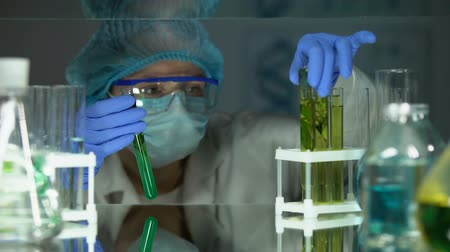 produtos químicos : Scientist comparing plant samples in different liquids, preservative agent study