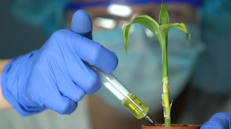 plodnost : Biologist injecting fertilizer into test plant, pesticides development, breeding