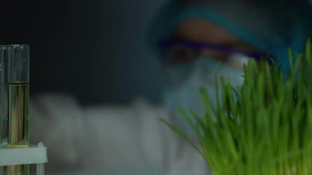 flasks : Lab researcher comparing plant test tube with wheatgrass sample, experiment