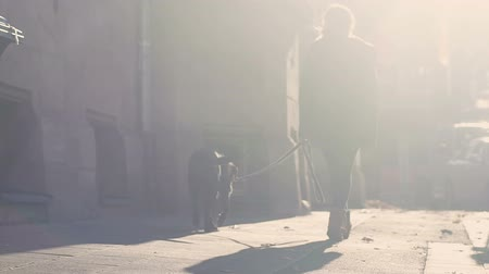 fiel : Girl walking dog on street, training and caring pet, time with best friend Stock Footage