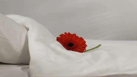 hotel suite : Female chambermaid putting flower on fresh bed-linen in hotel room, cleanness