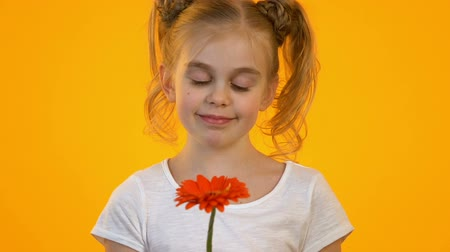 regozijo : Cute blond kid looking at red golden-daisy rejoicing present from secret admirer Stock Footage