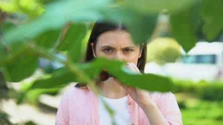 opsporing : Woman with binoculars hiding behind trees, journalist searching for sensation