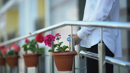 ponta : Woman watering flowers on balcony, taking care about apartment, close-up