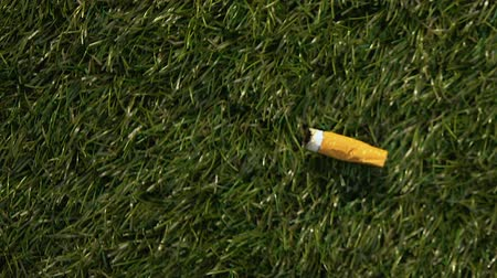 irresponsible : Cigarette butt tossed out on green grass, harmful effect on ecosystem, concept Stock Footage