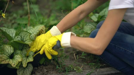 kielnia : Gardener hands in gloves with tool spudding soil around plant, gardening service Wideo