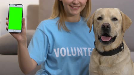 breed : Female volunteer showing smartphone with green screen, dog looking at camera