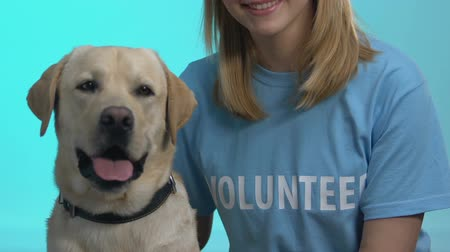 animal adoption : Cute dog and female volunteer on blue background closeup, pet adoption, charity