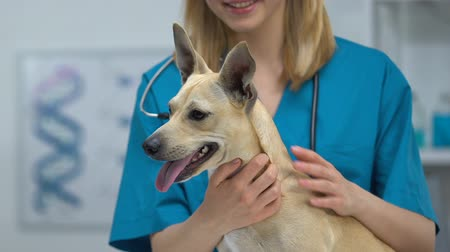 veterinario : Smiling female vet stroking dog, checkup in veterinary clinic, pet health care