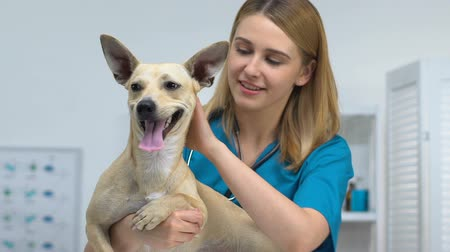 veterinario : Cheerful female vet holding adorable dog smiling on camera, pet health care Archivo de Video