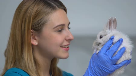 animal hospital : Female vet playing with cute rabbit, reducing stress before health care exam Stock Footage
