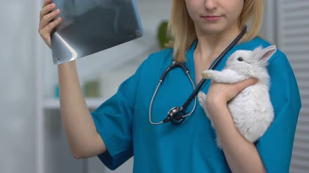 abeceda : Vet looking at x-ray, holding rabbit patient, diagnosis of injury, inflammations