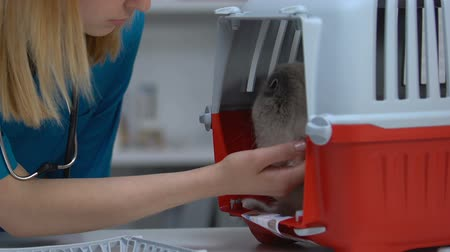 скрывать : Veterinarian stroking cat in carrier, soothing pet after physical examination