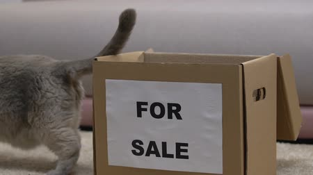 tlapky : Cat for sale jumping out of box, old pet abandoned by owners, adoption concept