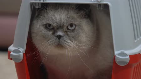 portador : Closeup of calm cat sitting comfortably in carrier, safe pet travel kennel