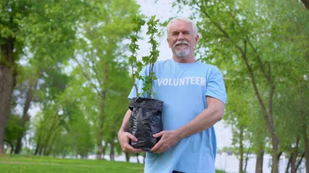 activist : Senior male volunteer holding plant seedling smiling camera, reforestation