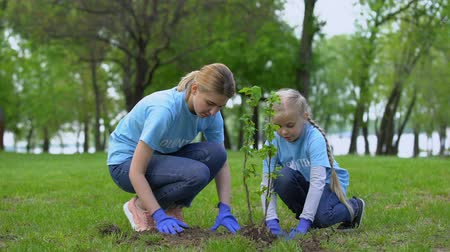restaurar : Mother and daughter planting bush in park together, environmental volunteering Vídeos
