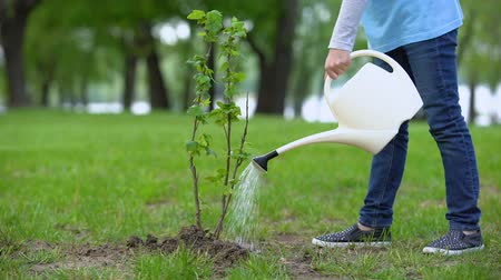 kutuları : Child watering bush in park, nature protection, reforestation school project